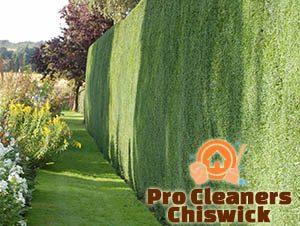 Trimmed Hedge Chiswick